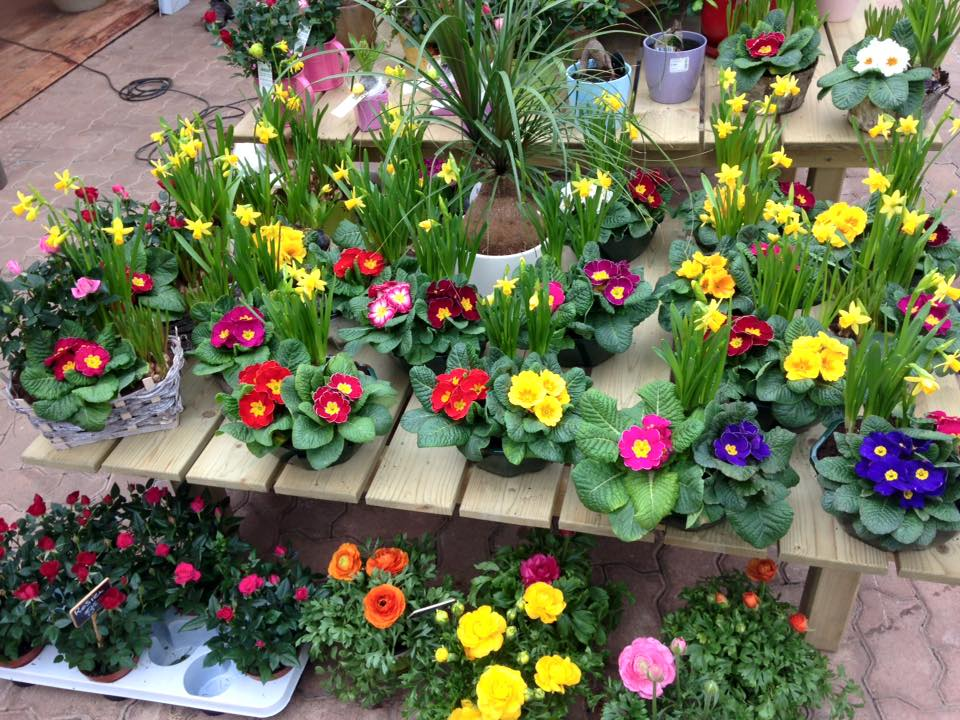 Fleuriste Rodez