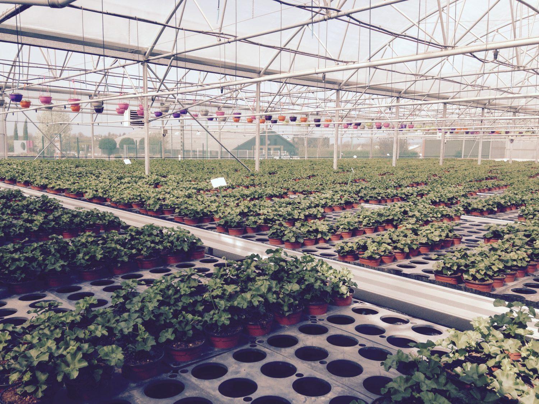 horticulteur, fleuriste Rodez