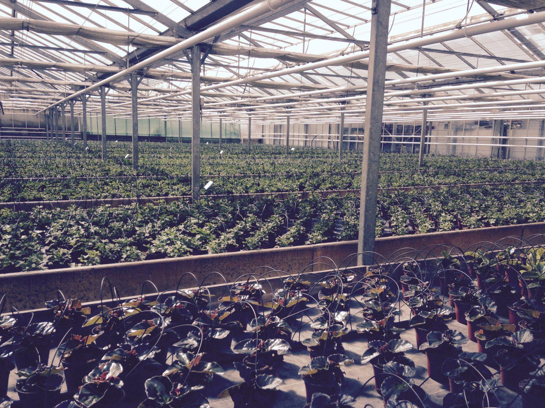 Horticulteurs Luc la Primaube