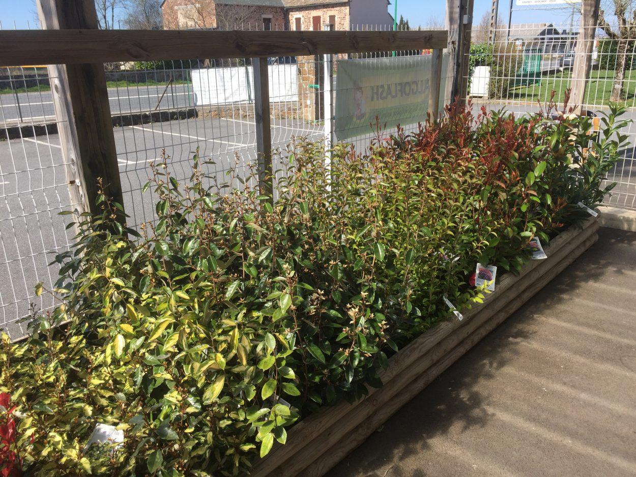 Création de vos haies pépinière jardinerie Rodez