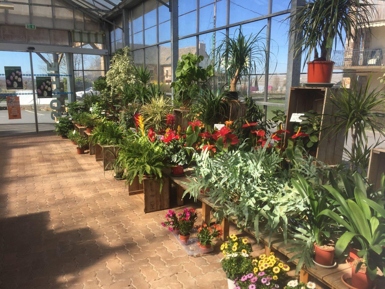 Jardinerie André, fleuriste rodez