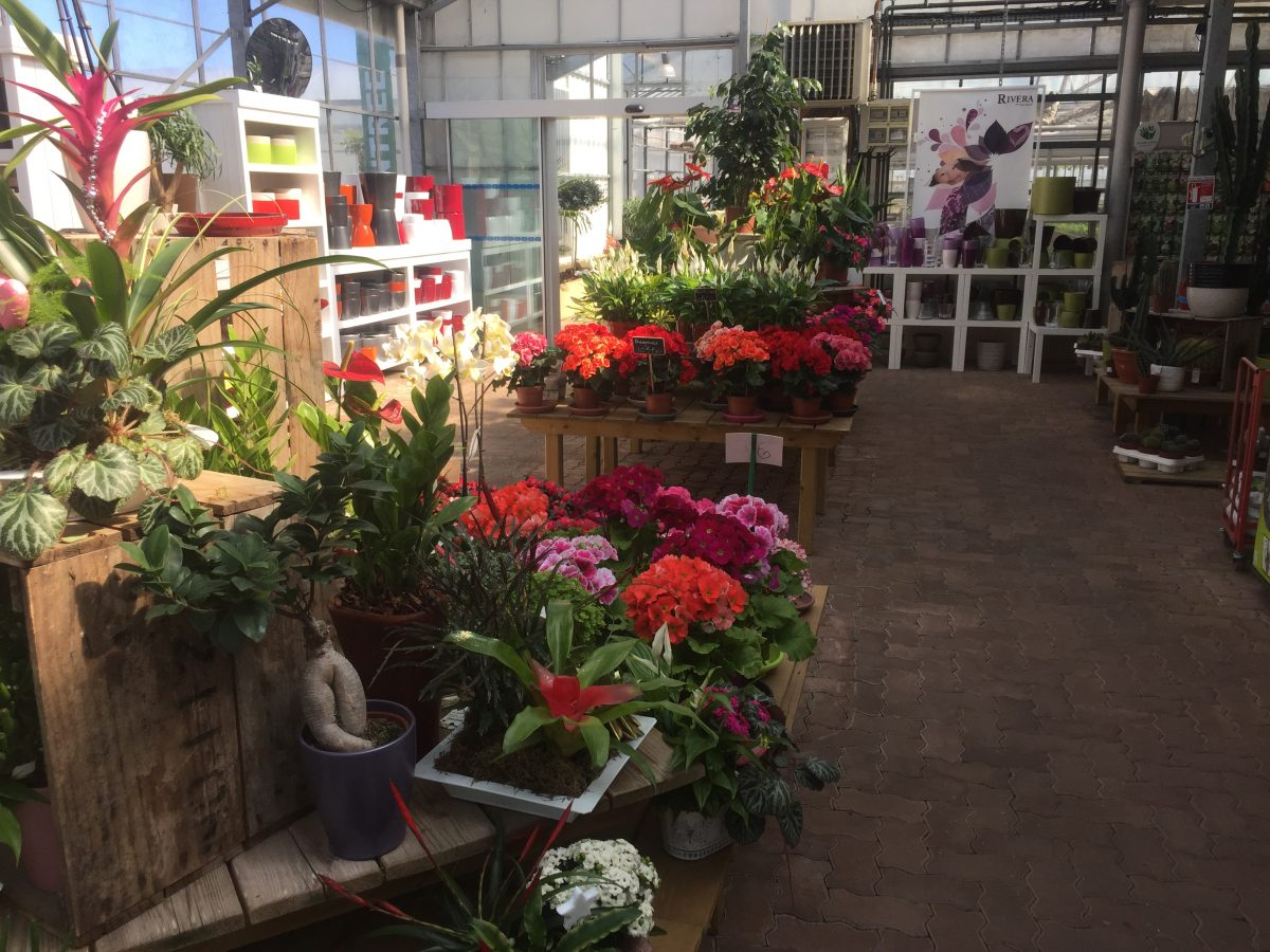 Vente de fleurs Rodez