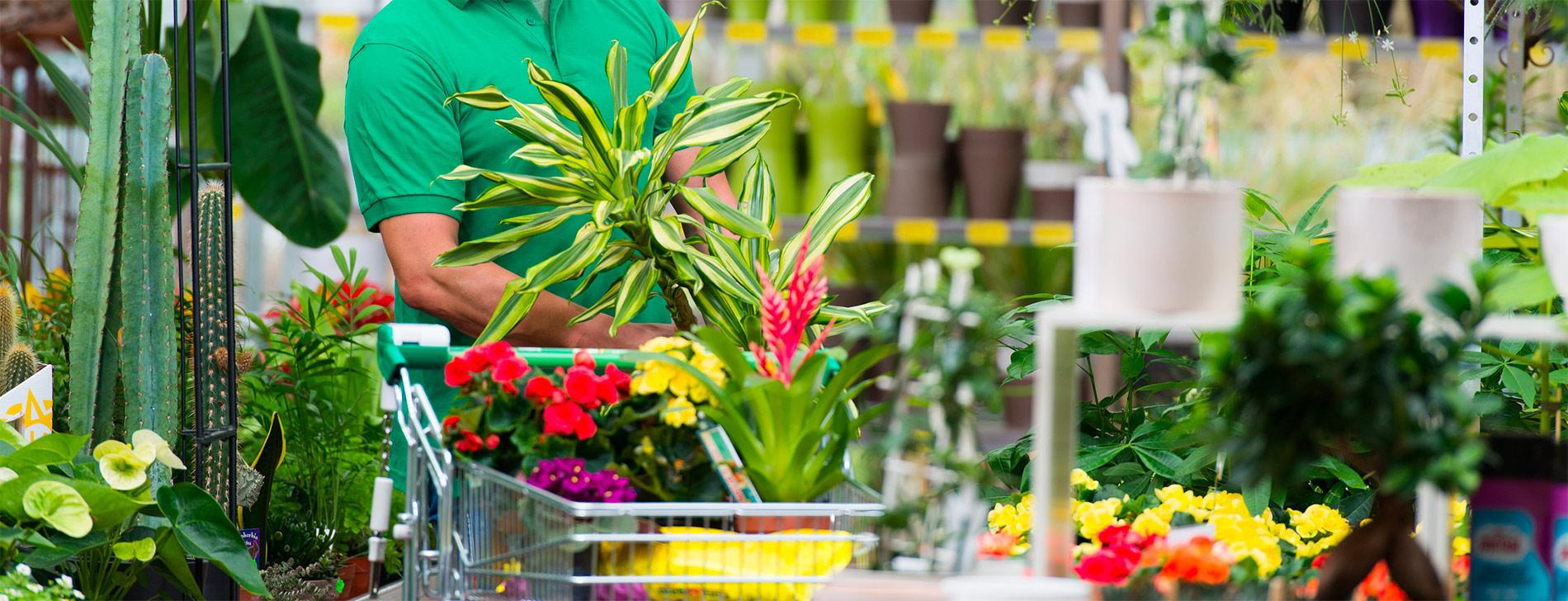Choisissez vos fleurs , outillages, arbres avec la jardinerie André à Rodez