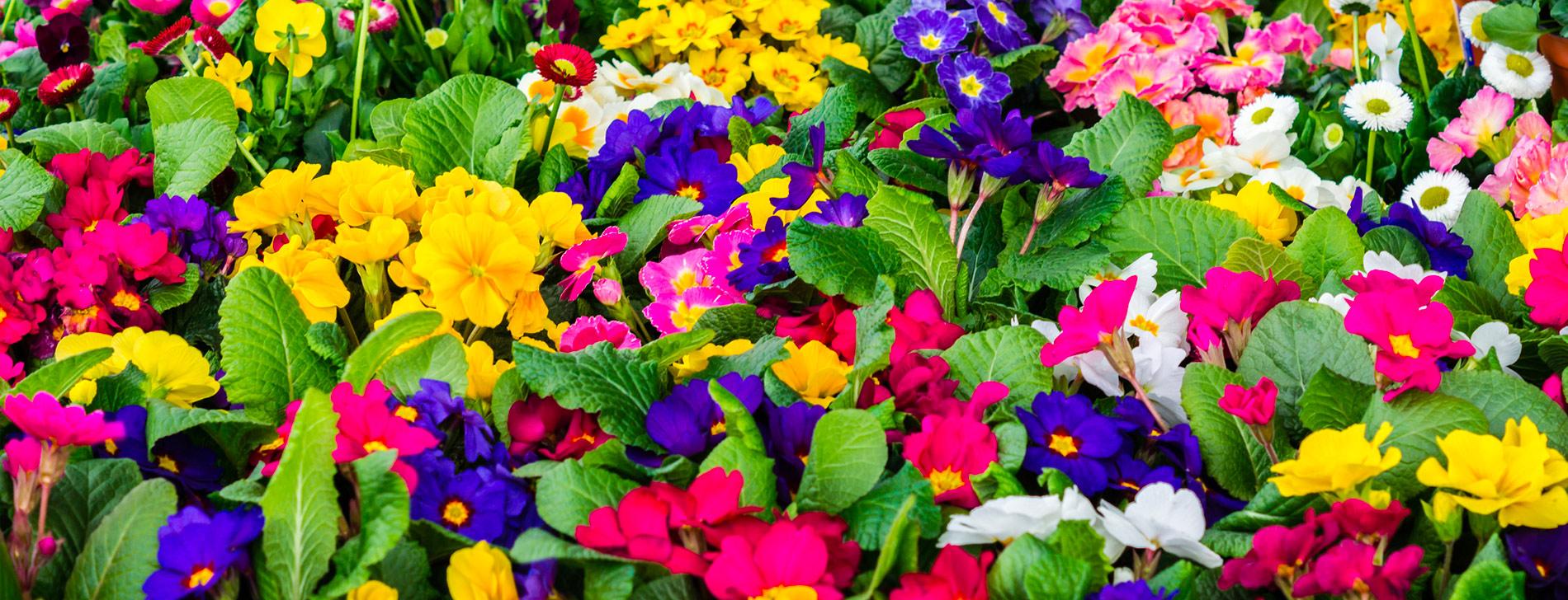 Décoration florale à la jardinerie André à Rodez