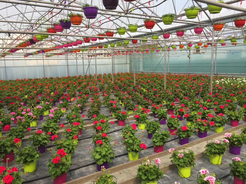 horticulteur rodez , fleuriste rodez , jardinerie andré , jardinerie rodez