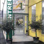 Vente d'oliviers à Rodez
